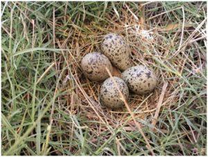 cuatro huevos